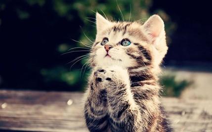 gatto-che-prega