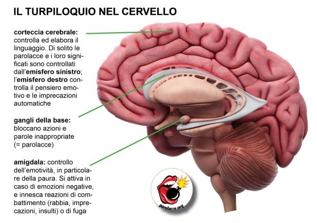 Turpiloquio nel cervello.jpg
