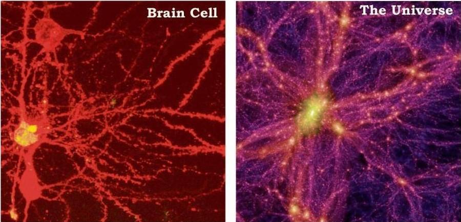 brain-cell-universe-1.jpg