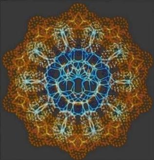 DNA trasversale.jpg
