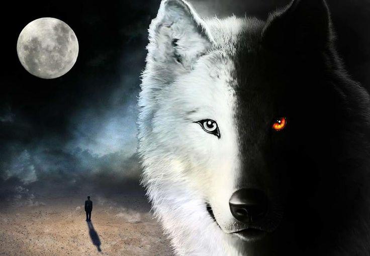 lupo-bianco-e-nero.jpg
