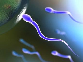 Spermatozoi.jpg