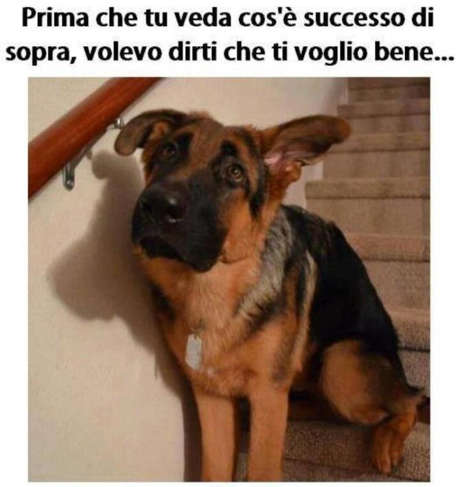 cane-dolcissimo-simpatico-670x709