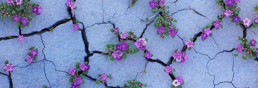 Fiori bucano la terra secca
